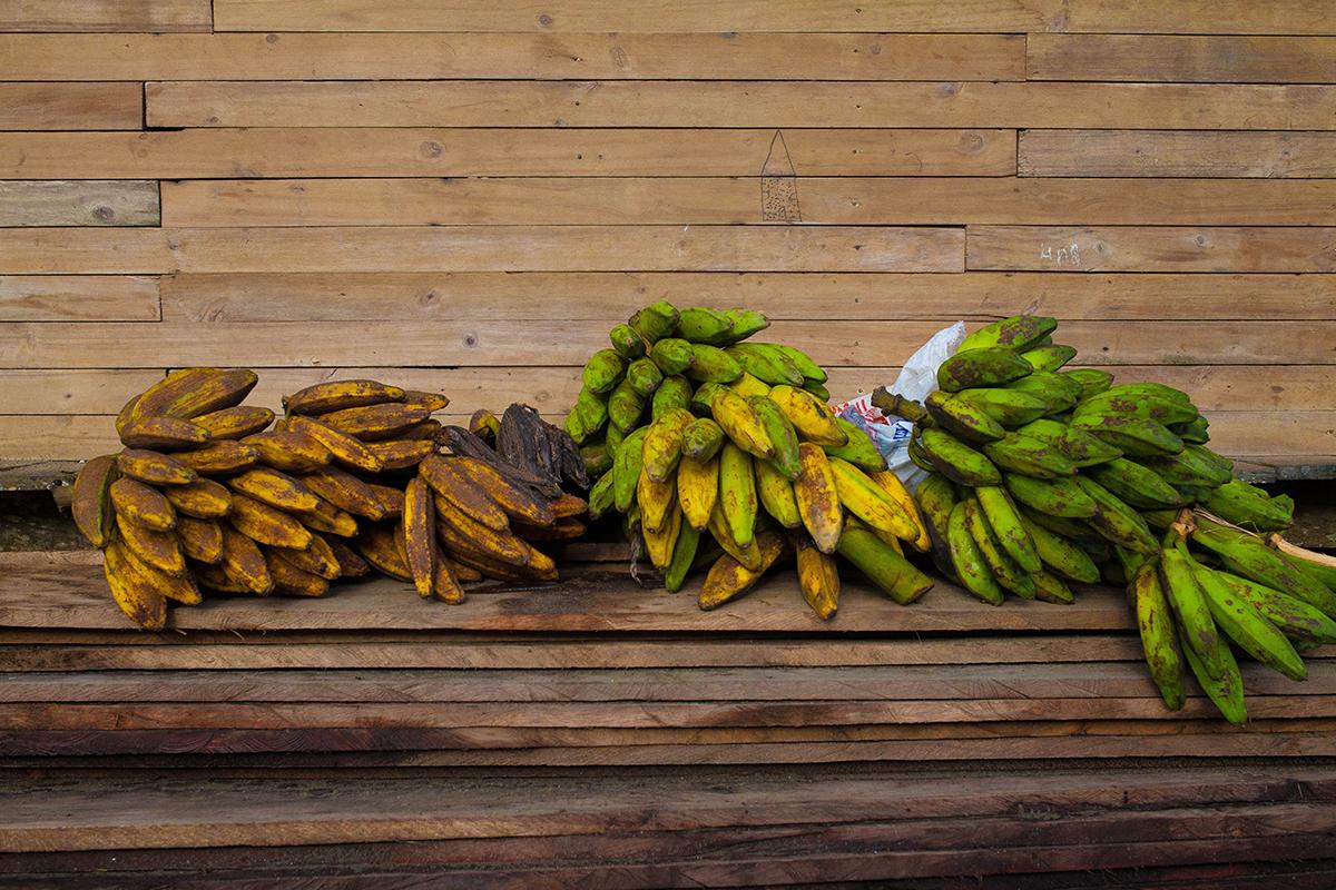 Jurubira Chocó  (10 de 47)
