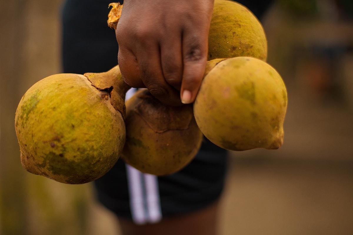 Jurubira Chocó  (39 de 47)