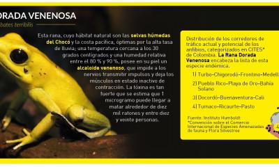 info_rana_dorada-01