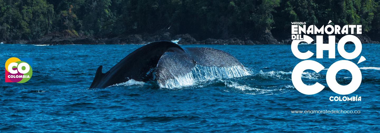 ve la ballena